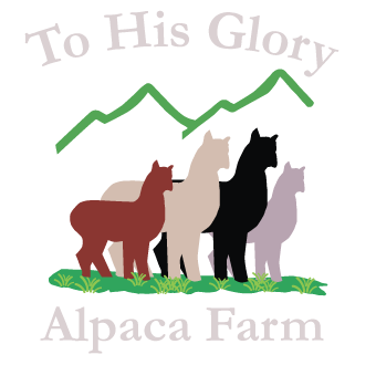 To His Glory Alpacas